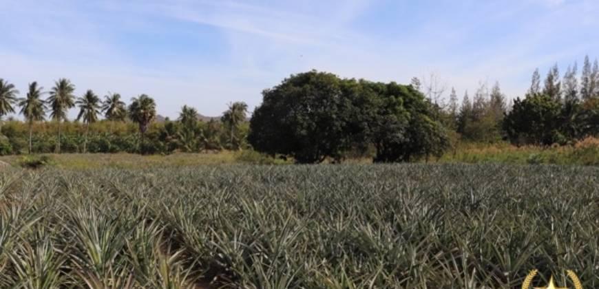 Land Plots for Sale Khao Tao